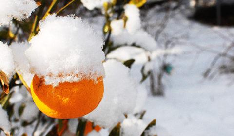 雪の季節も